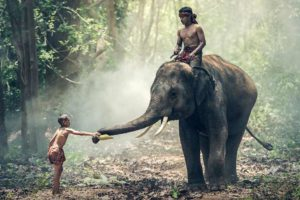Děti se slonem ilustrační obrázek - MADIO